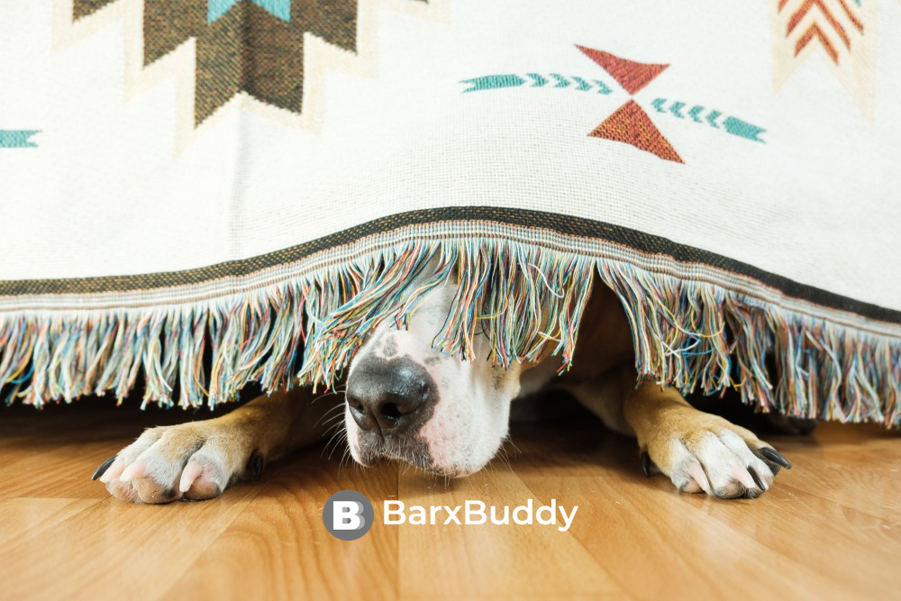We Asked BarxBuddy: Best Ways To Calm Your Anxious Dog During Frightening Times?
